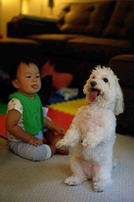 083109---Natural-Dog-Traine